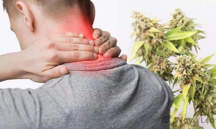Can we use CBD to treat inflammation?